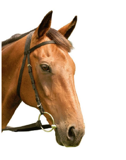 Equisential Nylon Racing Bridle