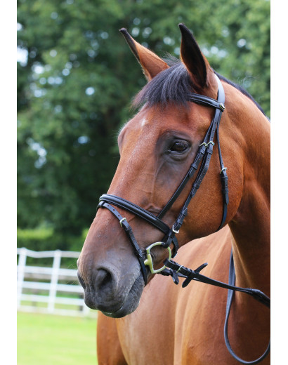 Economy Leather Bridle