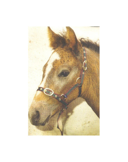 Nylon Headollar-Foal/ Yearling
