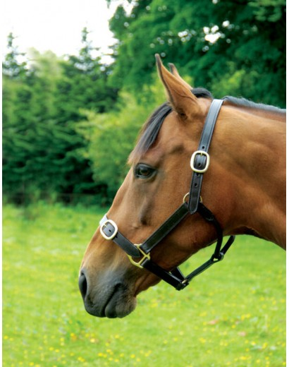 Leather Headcollar with...