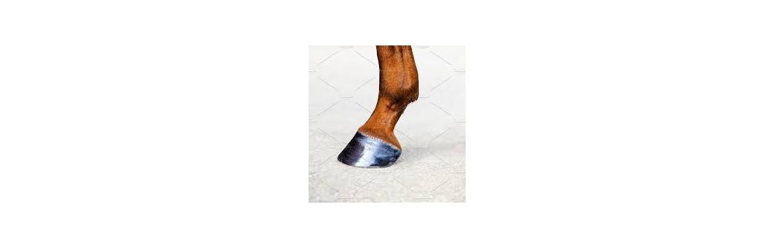 Leg and Hoof Care